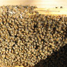 api-torre-cangiani